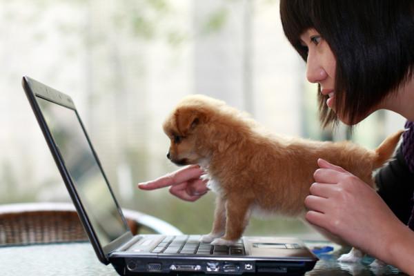 blogger-hewan-peliharaan_id-geek-girls